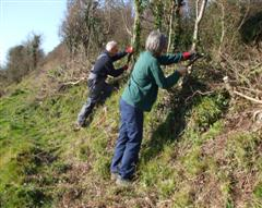 Hedge Laying Winter 2008